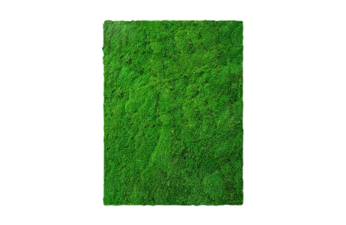 Linfadecor parete vegetale
