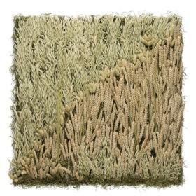 Linfa decor parete vegetale